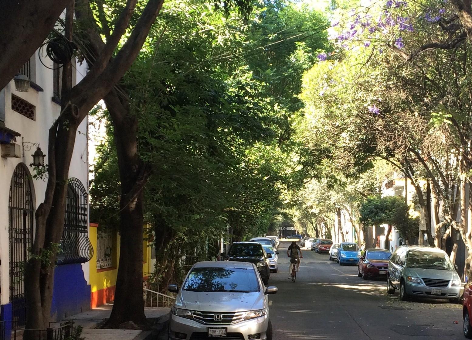 Tree-lined street in Condesa neighborhood