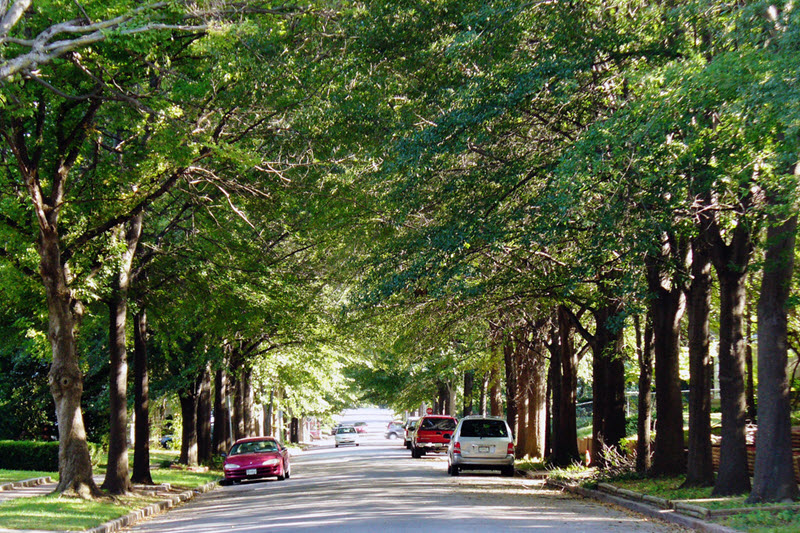 Street trees working their magic in Tulsa, OK.  (Photo by Daniel Jeffries)