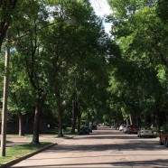 The Magic of a Tree-Lined Street